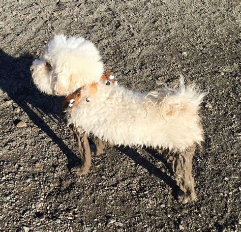 20+ Reasons You Should Never Let Your Dog Play In The Mud