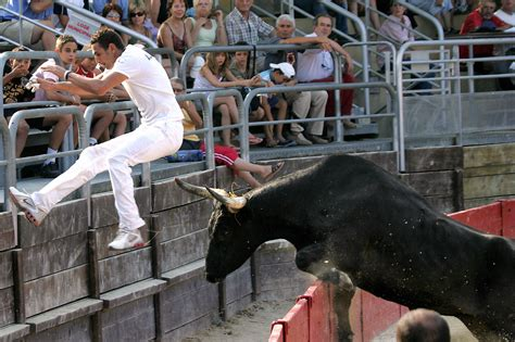 In France's Camargue, Bulls Are A Passion And A Way Of