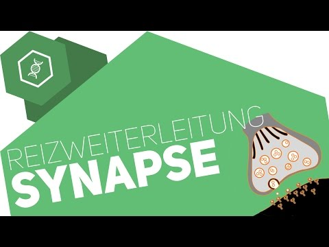 synaps nervcell muskelcell - YouTube