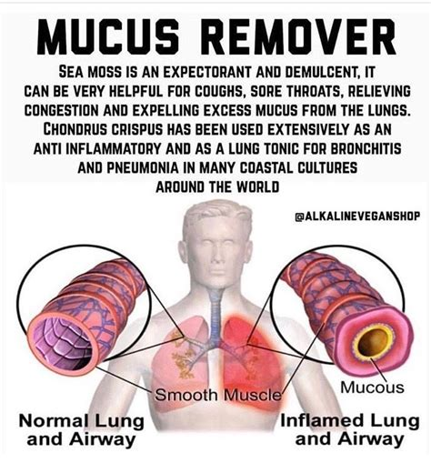 Mucus remover Lungs Sea Moss | Lungs health, Health heal